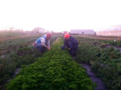 This Is The Final Post In A Summer Long Series From A Young Farmer Working  As A Harvest Crew Leader At Gardens Of Eagan.