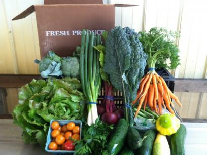 July CSA box from Loon Organics