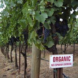 organic wine sign