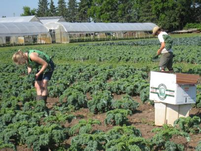 This Is The Fourth Post In A Summer Long Series From A Young Farmer Working  As A Harvest Crew Leader At Gardens Of Eagan. Check Out Previous Posts, ...