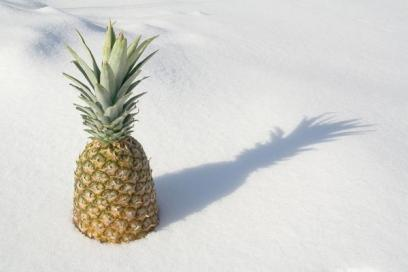 pineapple in snow