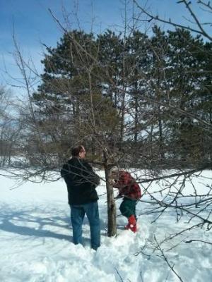 Pruning workshop in progress