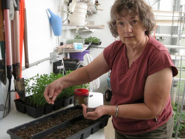 Planting Rain Gutter Trays
