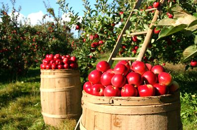 Pick some Minnesota apples this weekend.