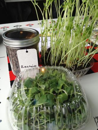 At Bossy's CSA meet up, members were given take-home goodies, including pea shoots and micro greens