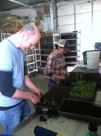 Farm volunteer (and Cordon Bleu instructor) Jonathan Kaye helps me pot up some brassicas