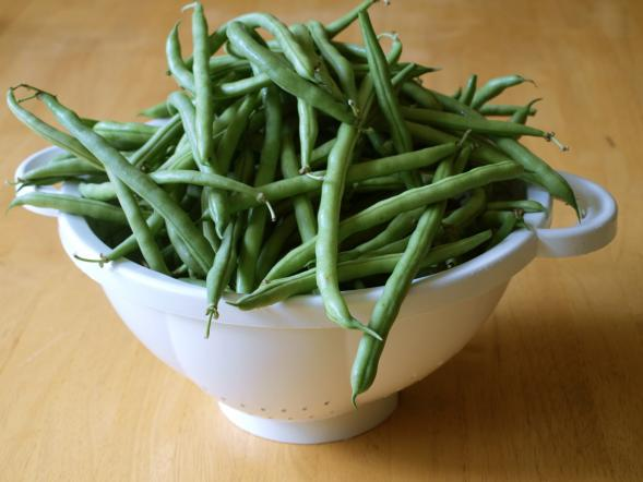 Green beans, fresh from the market