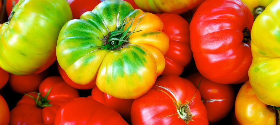 """Does it matter whether an heirloom tomato is local and organic if it was harvested by slave labor?"""