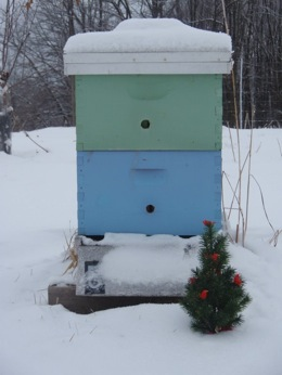 Beehive at Sapsucker Farms