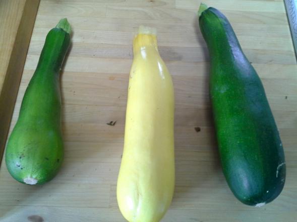 Zucchini, fresh from the garden
