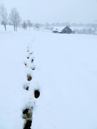 Our pre-breakfast ritual includes a snowy walk for farm chores