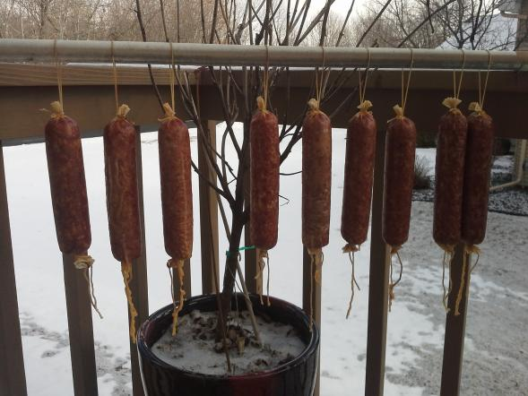 Letting Sausages Hang Overnight (Step #4 in Recipe Below)